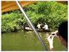 Lancha con techo y motor por un lado y una canoa sencilla por el otro. Touristas armados con cámeras versus la población con caña de pescar y asi la población local se convierte en una atracción turística (fuente de CalPrim compartida)- Foto 10/ Panama)