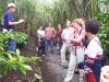 Plaatselijke gids legt iets uit over de koffie plant. Een extra uitleg kan enorm helpen voor een betere BelCal opname door meer achtergrond kennis. Verwachtingen van toeristen zijn in deze gevallen gemiddeld tot nauw – Foto 15/Costa Rica
